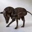 Wild Boar B by Sophie Dickens